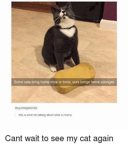 Cats, Memes, and Birds: Some cats bring home mice or birds, ours brings home sponges  disgustinganimals  this is  what im talking about what a  champ Cant wait to see my cat again