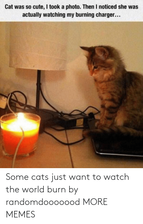 Cats: Some cats just want to watch the world burn by randomdooooood MORE MEMES