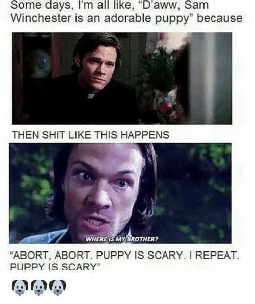 """adorable puppy: Some days, I'm all like, """"D'aww, Sam  Winchester is an adorable puppy"""" because  THEN SHIT LIKE THIS HAPPENS  WHERE IS MY BROTHER?  """"ABORT, ABORT. PUPPY IS SCARY. REPEAT.  PUPPY IS SCARY"""" 🐶🐶🐶"""