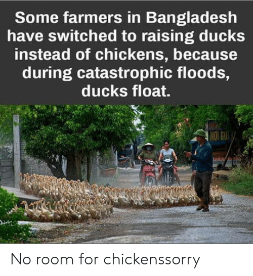 bangladesh: Some farmers in Bangladesh  have switched to raising ducks  instead of chickens, because  during catastrophic floods,  ducks float.  re No room for chickenssorry