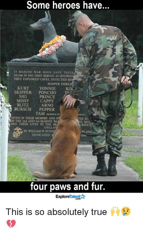 blitz: Some heroes have.  25 MARINE WAR DOGS GAVE THEIR  GUAM IN 1944, THEY SERVED AS SENTRIES  THEY EXPLORED CAVES, DETECTED MI  SEMPER FIDELI  KURT  YONNIE  KO  SKIPPER  PONCHO  NIG  PRINCE  MISSY  CAPPY  BLITZ  ARNO  BURSCH  PEPPER  TAM aURIEDAT  GIVEN IN THEIR MEMORY AND O  THE SUA  OF THE 2nd AND 3rd MARINE WA  OWE THEIR LIVES TO THE BR  GALLA  BY WILLIAM W PUTN  DEDICATED  four paws and fur.  Talent  Explore This is so absolutely true 🙌😢💔