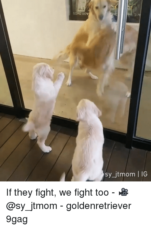 9gag, Memes, and Fight: SOME HOv  sy_jtmom | IG If they fight, we fight too - 🎥@sy_jtmom - goldenretriever 9gag