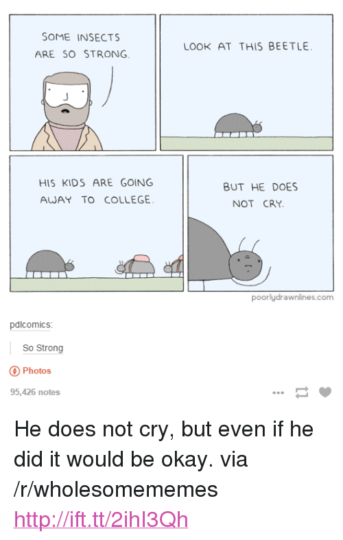 """Going Away: SOME INSECTS  ARE SO STRONG  LOOK AT THIS BEETLE  HIS KIDS ARE GOING  AWAY TO COLLEGE  BUT HE DOES  NOT CRY  poorlydrawnlines.com  pdlcomics  So Strong  Photos  95,426 notes <p>He does not cry, but even if he did it would be okay. via /r/wholesomememes <a href=""""http://ift.tt/2ihI3Qh"""">http://ift.tt/2ihI3Qh</a></p>"""