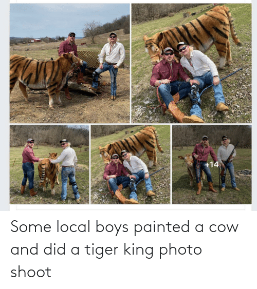 did: Some local boys painted a cow and did a tiger king photo shoot