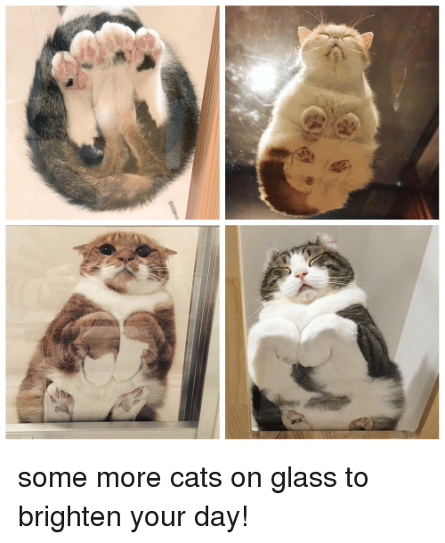 Cats, Some More, and Glass
