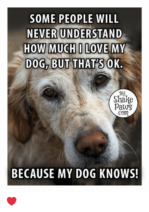 Love, Memes, and Never: SOME PEOPLE WILL  NEVER UNDERSTAND  HOW MUCHI LOVE MY  DOG, BUT THATSOK.  By  Shake  Paws  com  BECAUSE MY DOG KNOWS! ❤️