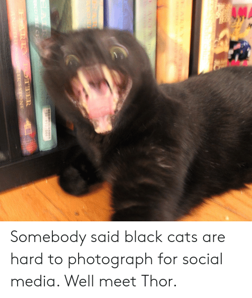 Cats, Social Media, and Black: Somebody said black cats are hard to photograph for social media. Well meet Thor.