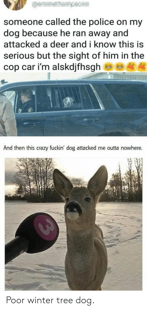 Outta Nowhere: someone called the police on my  dog because he ran away and  attacked a deer and i know this is  serious but the sight of him in the  cop car i'm alskdjfhsgh  And then this crazy fuckin' dog attacked me outta nowhere. Poor winter tree dog.