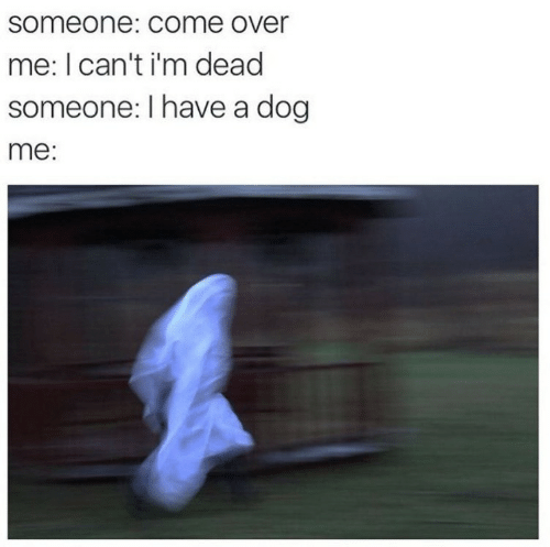im dead: someone: COme over  me: I can't i'm dead  someone: I have a dog  me: