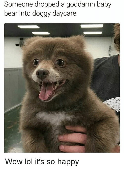 Memes, 🤖, and Baby Bear: Someone dropped a a goddamn baby  bear into doggy Wow lol it's so happy