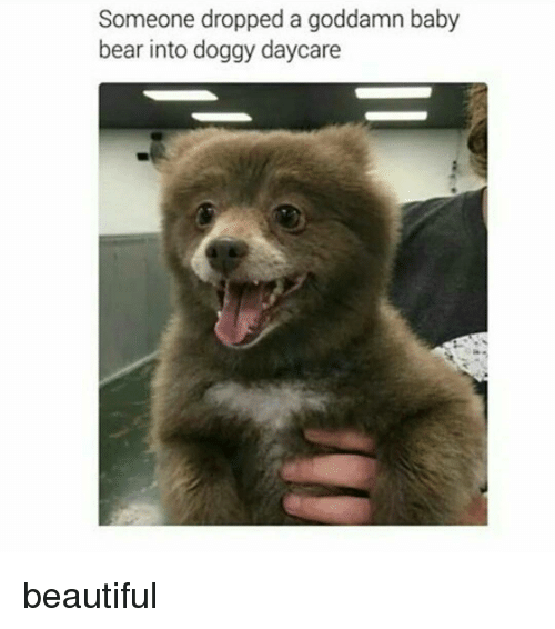 Memes, 🤖, and Baby Bear: Someone dropped a goddamn baby  bear into doggy daycare beautiful