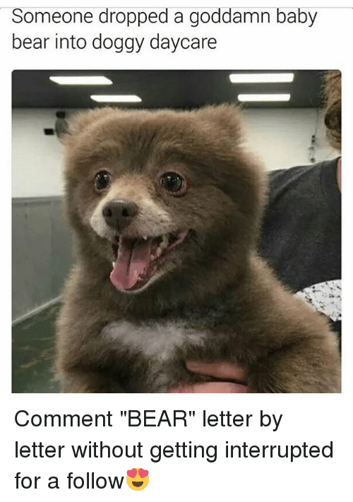 """Memes, Bear, and Baby: Someone dropped a goddamn baby  bear into doggy daycare Comment """"BEAR"""" letter by letter without getting interrupted for a follow😍"""