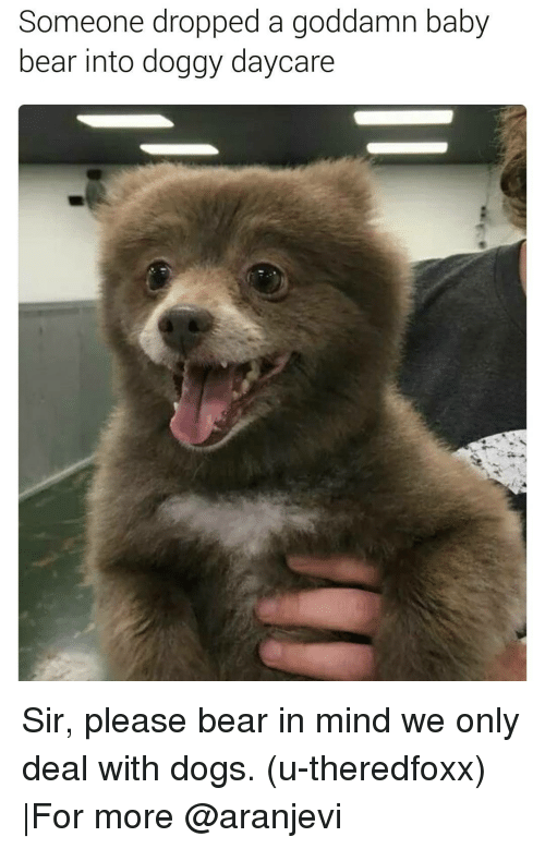 Memes, 🤖, and Baby Bear: Someone dropped a goddamn baby  bear into doggy daycare Sir, please bear in mind we only deal with dogs. (u-theredfoxx) |For more @aranjevi