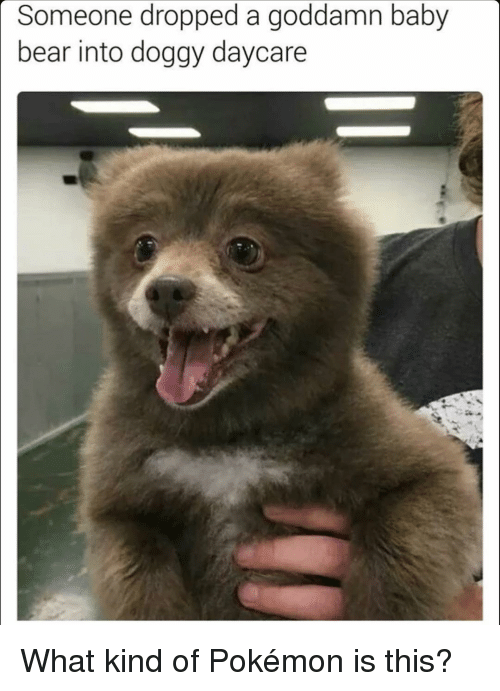 Memes, 🤖, and Baby Bear: Someone dropped a goddamn baby  bear into doggy daycare What kind of Pokémon is this?