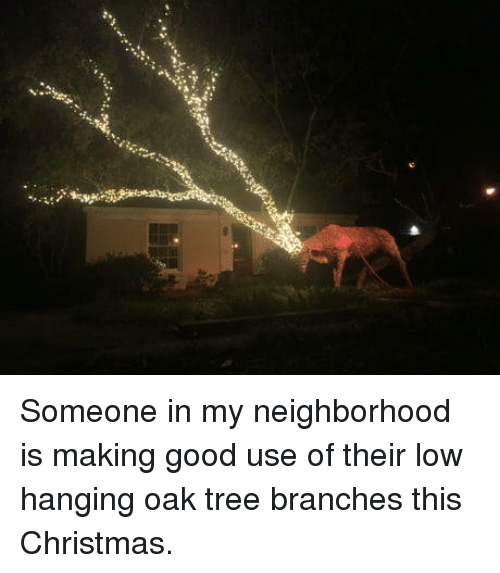 this christmas: Someone in my neighborhood is making good use of their low hanging oak tree branches this Christmas.