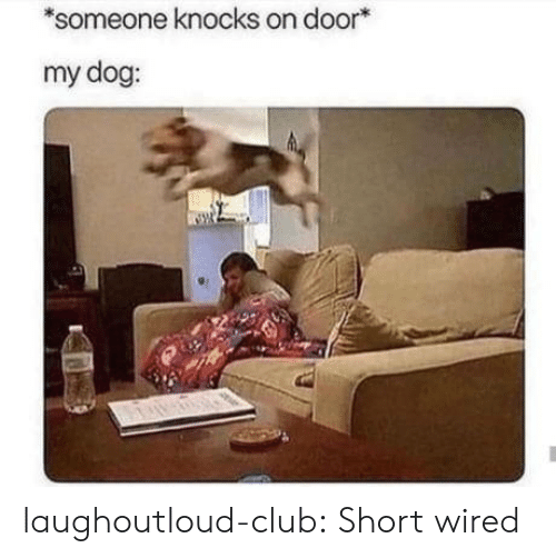 Club, Tumblr, and Blog: someone knocks on door*  my dog: laughoutloud-club:  Short wired