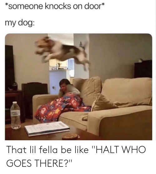"Be Like, Dank, and Fella: *someone knocks on door  my dog: That lil fella be like ""HALT WHO GOES THERE?"""