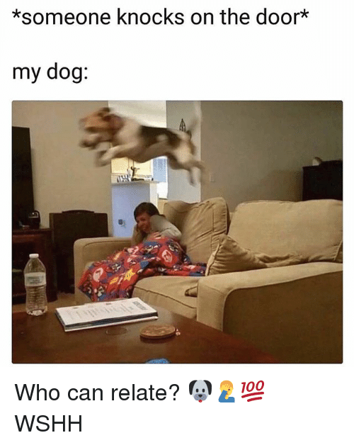 Memes, Wshh, and 🤖: *someone knocks on the door*  my dog: Who can relate? 🐶🤦‍♂️💯 WSHH