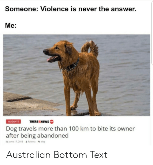 Incidents: Someone: Violence is never the answer.  Me:  INCIDENTS  THEREISNEWS  Dog travels more than 100 km to bite its owner  after being abandoned  G junio 17, 2018  Fabiola dog Australian Bottom Text