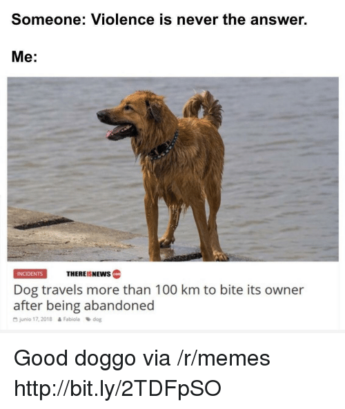 Answer Me: Someone: Violence is never the answer.  Me:  THEREISNEws  INCIDENTS  cotm  Dog travels more than 100 km to bite its owner  after being abandoned  G junio 17, 2018  Fabiola dog Good doggo via /r/memes http://bit.ly/2TDFpSO