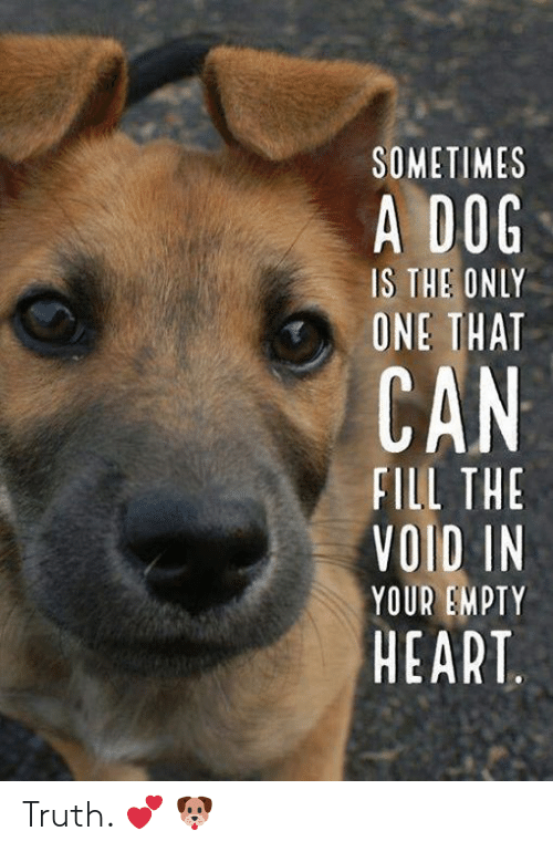 Memes, Heart, and Only One: SOMETIMES  A DOG  IS THE ONLY  ONE THAT  FILL THE  VOID IN  YOUR EMPTY  HEART Truth. 💕 🐶
