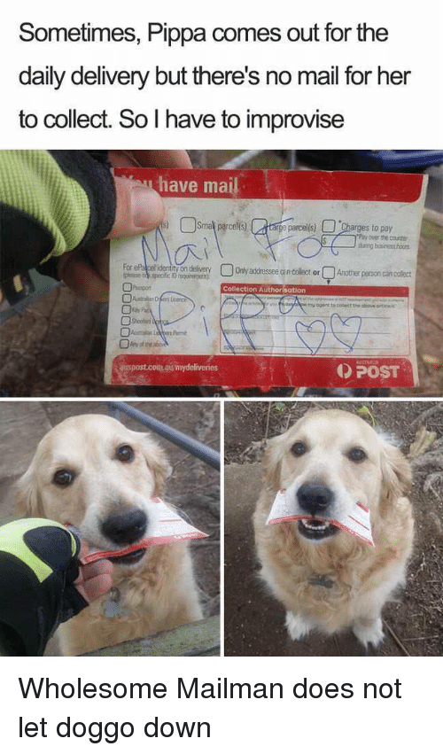 Mail, Wholesome, and Doggo: Sometimes, Pippa comes out for the  daily delivery but there's no mail for her  to collect. So I have to improvise  have mai  ge parcel(s)  es to pay  over the cour  durig busiresthous  OOryaddresseeancolect orQsother person cancolect  onde  Collection Authorisation  POST  aispost.com.aumydeliveries <p>Wholesome Mailman does not let doggo down</p>