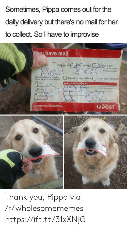 Shooters: Sometimes, Pippa comes out for the  daily delivery but there's no mail for her  to collect. So I have to improvise  have mail  Smal parcels)  s)  targe parcel(s)  Charges to pay  Pay over the counter  during business hous  Mai  For ePalcel identity on delivery  (please tidk specific ID requirement)  Only addressee can collect or  Another person can collect  Passport  Collection Authorisation  Australian Drers Licence  Key Pa  Shooters cpce  fetidere persongsgnore of the addressee a NOT requred and youwah someone  eartoe  wmy ogent to collect the above articlels  Australian Lepers Pemit  Any of the above  AUSTRALIA  POST  auspost.com.au/mydeliveries Thank you, Pippa via /r/wholesomememes https://ift.tt/31xXNjG