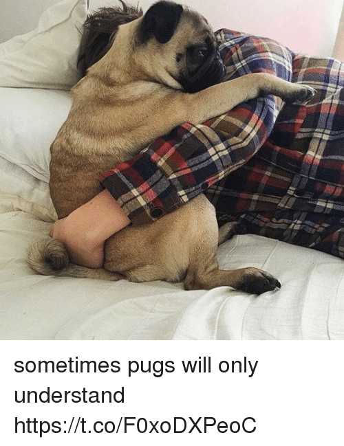 Understanded: sometimes pugs will only understand https://t.co/F0xoDXPeoC