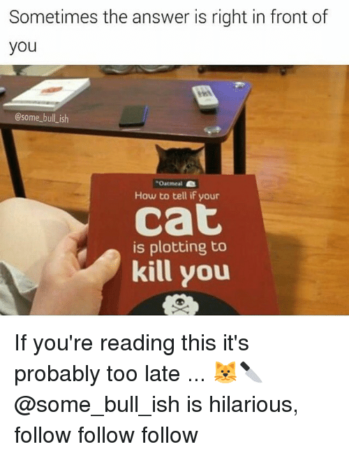 follow-follow-follow: Sometimes the answer is right in front of  you  @some_bull ish  Oatmeal  How to tell if your  cat  is plotting to  kill you If you're reading this it's probably too late ... 🐱🔪 @some_bull_ish is hilarious, follow follow follow