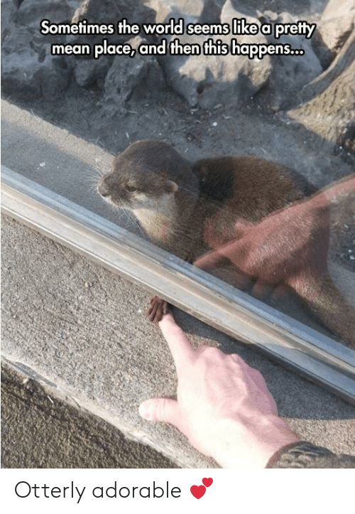 Liked A: Sometimes the world seems like a pretty  mean place,and then this happens. Otterly adorable 💕