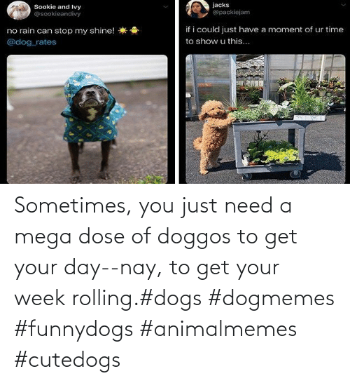 Just Need: Sometimes, you just need a mega dose of doggos to get your day--nay, to get your week rolling.#dogs #dogmemes #funnydogs #animalmemes #cutedogs
