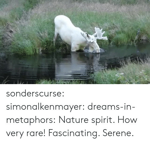 Target, Tumblr, and Blog: sonderscurse:  simonalkenmayer:  dreams-in-metaphors: Nature spirit.  How very rare!   Fascinating. Serene.