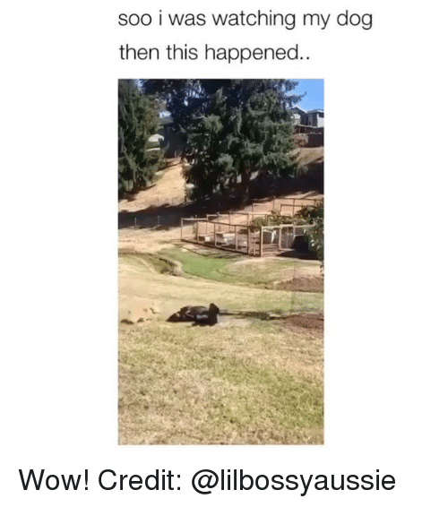 Memes, Wow, and 🤖: soo i was watching my dog  then this happened.. Wow! Credit: @lilbossyaussie