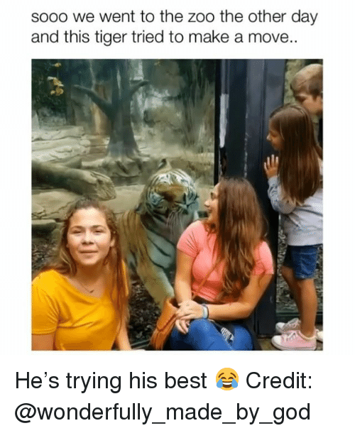 God, Memes, and Best: sooo we went to the zoo the other day  and this tiger tried to make a move.. He's trying his best 😂 Credit: @wonderfully_made_by_god