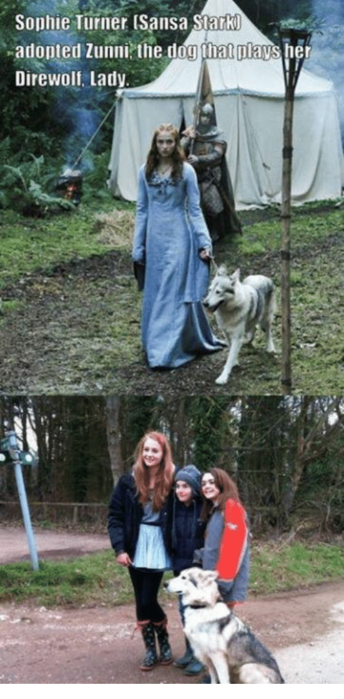 Dogs, Memes, and Sophie Turner: Sophie Turner (Sansa Stark0  adopted Zunni the dog natmavs her  Dire Wolf, Lady