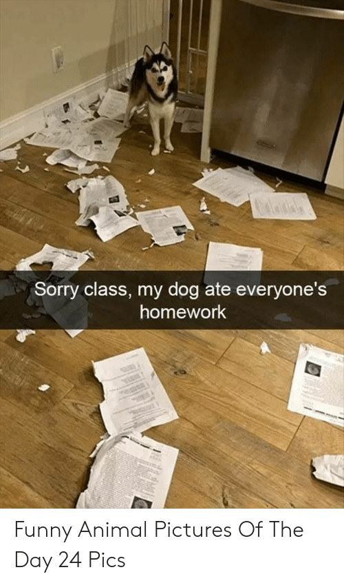 animal pictures: Sorry class, my dog ate everyone's  homework Funny Animal Pictures Of The Day 24 Pics