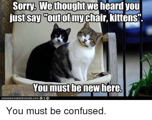 """We Heard You: Sorry, We thought  we  heard you  just say out of my  kittens"""".  You must be new here. You must be confused."""
