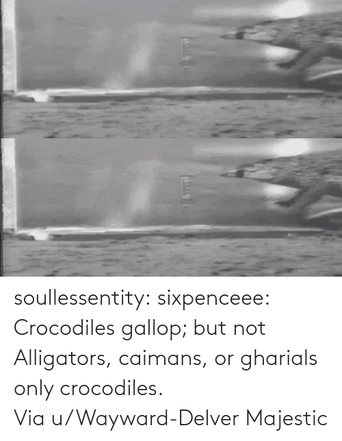 But: soullessentity: sixpenceee: Crocodiles gallop; but not Alligators, caimans, or gharials only crocodiles. Via u/Wayward-Delver Majestic