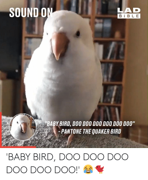 "sound: SOUND ON  LAD  BIBLE  BABY BIRD, DOO DOO DOO DOO DOO DO0""  -PANTONE THE QUAKER BIRD 'BABY BIRD, DOO DOO DOO DOO DOO DOO!' 😂🐦"