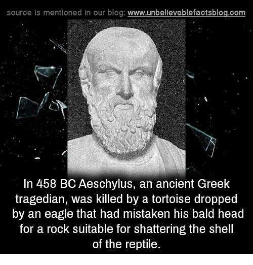 Bald Headed: source is mentioned In our blog  www.unbelievablefactsblog.com  In 458 BCAeschylus, an ancient Greek  tragedian, was killed by a tortoise dropped  by an eagle that had mistaken his bald head  for a rock suitable for shattering the shell  of the reptile.