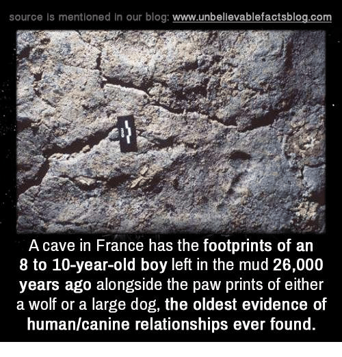large dogs: source ls mentioned in our blog  www.unbelievablefactsblog.com  A cave in France has the footprints of an  8 to 10-year-old boy left in the mud 26,000  years ago alongside the paw prints of either  a Wolf or a large dog, the oldest evidence of  human/canine relationships ever found