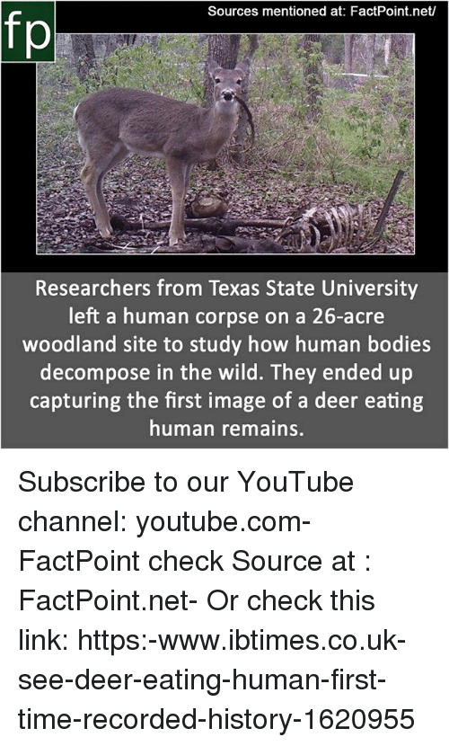 acre: Sources mentioned at: FactPoint.net/  fp  Researchers from Texas State University  left a human corpse on a 26-acre  woodland site to study how human bodies  decompose in the wild. They ended up  capturing the first image of a deer eating  human remains. Subscribe to our YouTube channel: youtube.com-FactPoint check Source at : FactPoint.net- Or check this link: https:-www.ibtimes.co.uk-see-deer-eating-human-first-time-recorded-history-1620955