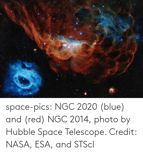 Credit: space-pics:  NGC 2020 (blue) and (red) NGC 2014, photo by Hubble Space Telescope. Credit: NASA, ESA, and STScI