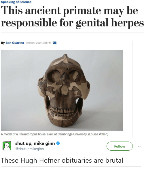 Obituaries: Speaking of Science  his ancient primate may be  responsible for genital herpes  By Ben Guarino October 2 at 1:30 PM  A model of a Paranthropus boisei skull at Cambridge University. (Louise Walsh)   shut up, mike ginn Φ  @shutupmikeginn  Follow  These Hugh Hefner obituaries are brutal