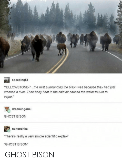 "scientific: speeding54  YELLOWSTONE-  the mist surrounding the bison was because they had just  crossed a river. Their body heat in the cold air caused the water to turn to  vapor.""  dreamingariel  GHOST BISON  nanoochka  ""There's really a very simple scientific expla-  ""GHOST BISON"" GHOST BISON"