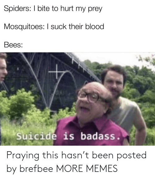 I Suck: Spiders: I bite to hurt my prey  Mosquitoes: I suck their blood  Bees:  Suicide is badass. Praying this hasn't been posted by brefbee MORE MEMES