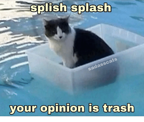 Trash, Splash, and Opinion: splish splash  sadasscats  your opinion is trash