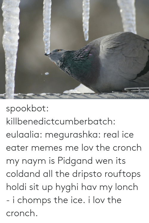 ice: spookbot: killbenedictcumberbatch:  eulaalia:  megurashka: real ice eater memes me  lov the cronch  my naym is Pidgand wen its coldand all the dripsto rouftops holdi sit up hyghi hav my lonch - i chomps the ice. i lov the cronch.