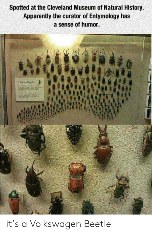 Apparently, Cleveland, and History: Spotted at the Cleveland Museum of Natural History.  Apparently the curator of Entymology has  a sense of humor.  A World d eedes it's a Volkswagen Beetle