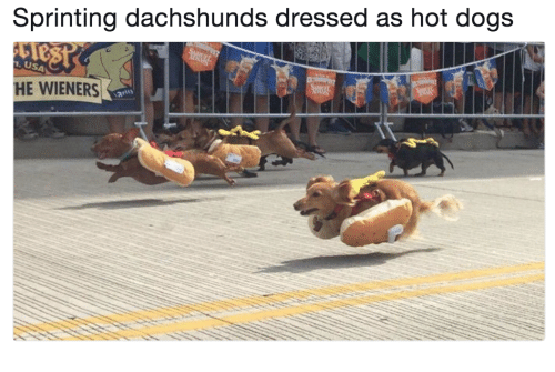 Dogs, Usa, and Hot Dogs: Sprinting dachshunds dressed as hot dogs  USA  HE WIENERS